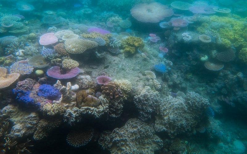 800px-Coral_Reef_Bleaching.jpg