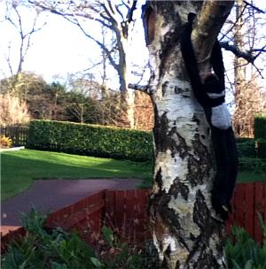 Tree_Monkey.jpg